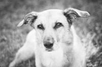 Lucrezia-Senserini-pet-photography-arezzo-3.jpg