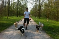 dogsitting2.jpg