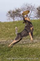 www.emanueledelbufalo.com #pet photography #crono #action #ancona #pro.jpg