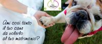 PET_SERVICE_CORATO_Pensione_Casalinga_e_Wedding_Dog_Sitting_4.jpg