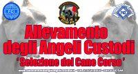GLI_ANGELI_CUSTODI_Allevamento_Cane_Corso.jpg