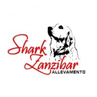 allevamento-golden-retriever-shark-zanzibar.jpg