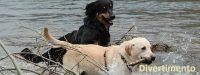 DOGSY_Asilo_per_Cani_e_Dog_Sitting_Venezia_1.jpg