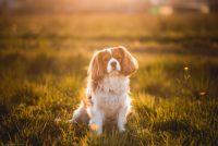 i-batuffoli-pet-photography-2.jpg