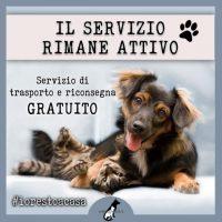 animalsparadise-cremazione-animali-forli-4.jpg