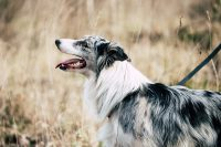 ANIMAFOTO_Pet_Photography_1
