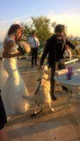 wedding_dog_sitter_parola_di_fido_1.jpg
