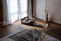 personal-dog-3.jpg