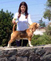 Allevamento_Beagle_Pacenco_3.jpg