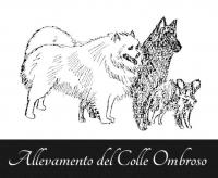 Allevamento_del_Colle_Ombroso.png