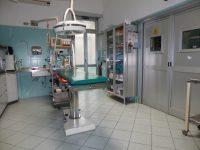 Veterinario_Torino_Dr.Remo_2.JPG