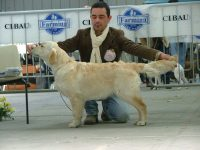TataRò_Allevamento_Golden_Retriever_2.jpg