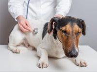 sardazootecnica-prodotti-veterinari-e-articoli-zootecnici_2.jpg