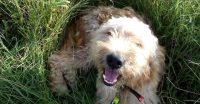 cane-al-sicuro-dog-sitter-barcellona-milazzo-1.jpg