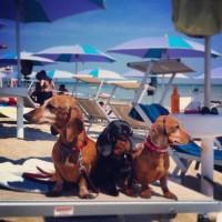 ISLAMORADA-Dog Beach-1.JPG