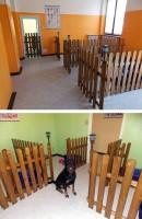 asilo-cani-arcore buona 1.jpg