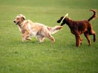 pensione-per-cani-giardino-di ecuba-1.jpg