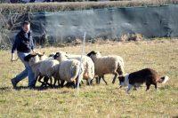dog-valley-attivita-cinofile-tradate-2.jpg