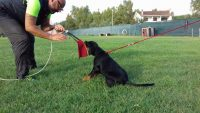 exercise-and-performance-dogs-trainer-3.jpg
