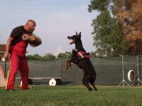 exercise-and-performance-dogs-trainer-2.jpg