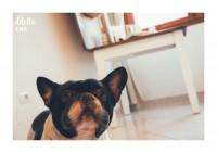 Pet-Photography-Cagliari-2.jpg
