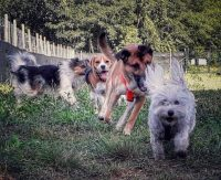 the-dogs-world-parco-giochi-per-cani-2.jpg