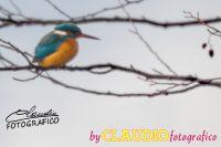 CLAUDIOfotografico.jpg