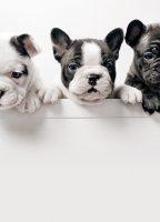 villa-gala-dog-resort-pensione-per-cani-gallarate-2