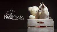 PetsPhoto_Roma.jpg
