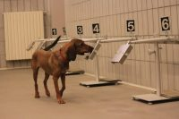 medical-detection-dogs-italy-4.jpg