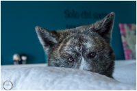 Micaela_equine-pet_photography_4
