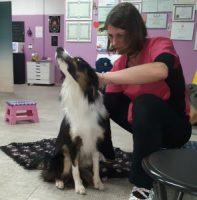 fisioterapia-veterinaria-pisa-2.jpg