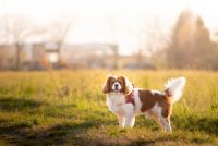 i-batuffoli-pet-photography-3.jpg