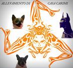 Casa_Carimi_Allevamento_Alani_e_Chihuahua.jpg