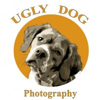 ugly-dog-pet-photography.jpg