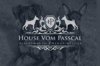 allevamento-zwergpinscher-house-vom-passcal.jpg