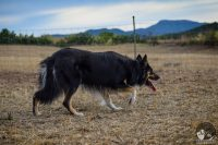 sheepnusa-sheepdog-center-2.jpg