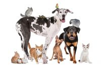 Dog-Sitter_e_Asilo_per_cani_Monza_Brianza_Animal_Friend_Services