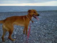 cane-al-sicuro-dog-sitter-barcellona-milazzo-4.jpg