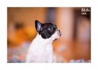 Pet-Photography-Cagliari-1.jpg