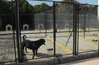 Allevamento-del-Levante-Pensione-per-cani-Bari-4.jpg