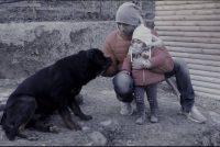 allevamento_rottweiler_piemonte_1.JPG