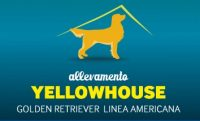 Allevamento_Golden_Retriever_Yellowhouse.jpg