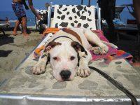 Bagni Capo Mele - Il Mio Cane | Portale sui Cani