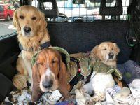 milano-dog-sitter-3.jpg