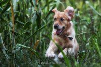 Michele_Baruffi_Pet_Photography_1.JPG