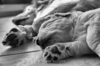 Michele_Baruffi_Pet_Photography_3.JPG