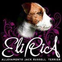 Elirica Allevamento Jack Russell Terrier.jpg