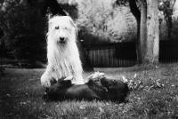 Lucrezia-Senserini-pet-photography-arezzo-1.jpg
