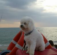 Bagno_Marechiaro_Dog_Beach_Viareggio_1.jpg